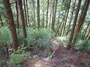 P1260208伐採切り開き斜面.JPG