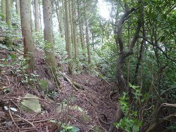 P1260210植林境の踏み跡(逆方向).JPG
