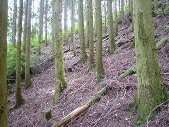 P1260213植林斜面.JPG