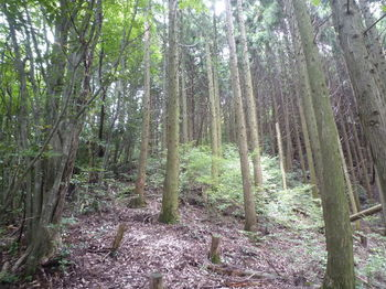 P1260214植林境尾根へ上がる(上方).JPG