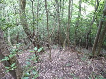 P1260216雑木疎林斜面を下る.JPG