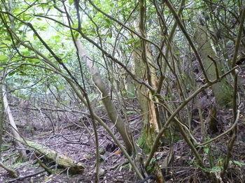P1260221植林谷を登り返す.JPG