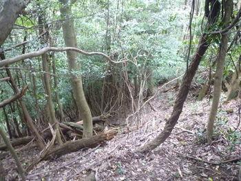 P1260223鞍部から谷沿いの踏み跡を下る.JPG