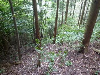 P1260224植林境の踏み跡.JPG