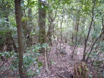 P1260227雑木疎林尾根を下る.JPG