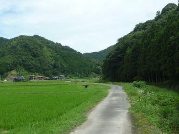 P1260259川沿いの舗装道.JPG