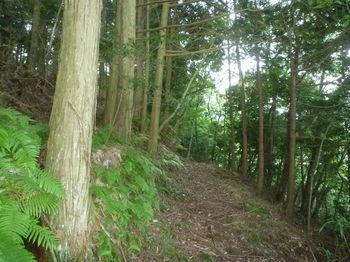 P1260275植林沿い.JPG