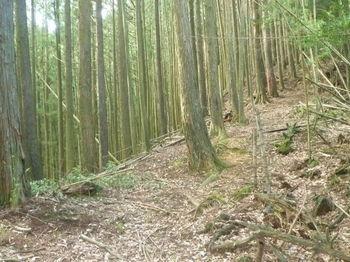 P1260278植林境尾根.JPG