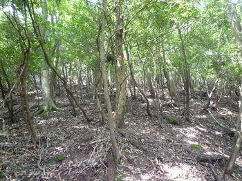 P1260307雑木疎林斜面.JPG