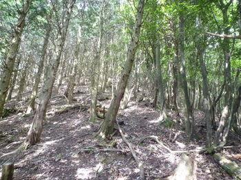 P1260309植林境尾根へ出る.JPG
