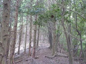 P1260312植林境尾根.JPG