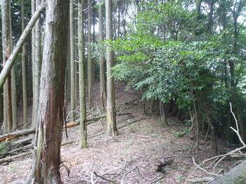 P1260321左植林境尾根.JPG