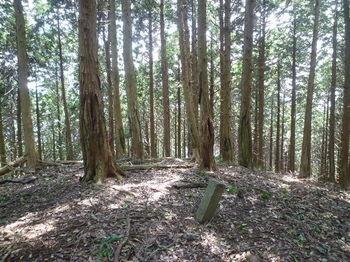 P1260360 410m支尾根分岐・町有林コン杭.JPG