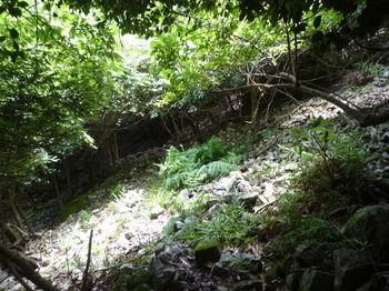 P1260375ガレ場の谷を横切る.JPG