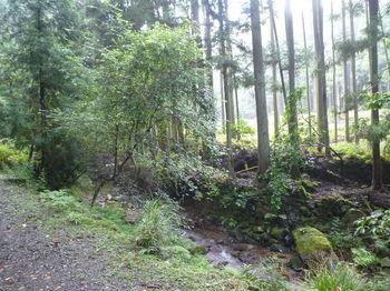P1260413対岸に伐採.JPG