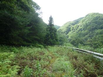 P1260420林道・白いガードレール.JPG