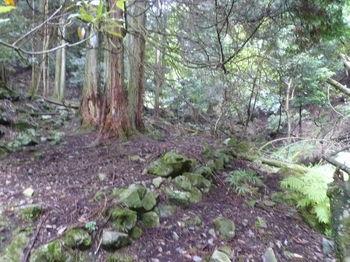 P1260439旧山道・ヒノキ林.JPG