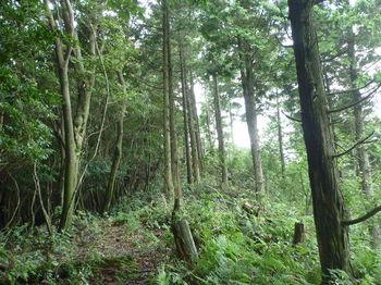 P1260475植林境平坦尾根.JPG