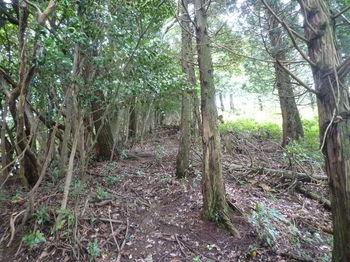 P1260488植林境平坦尾根.JPG