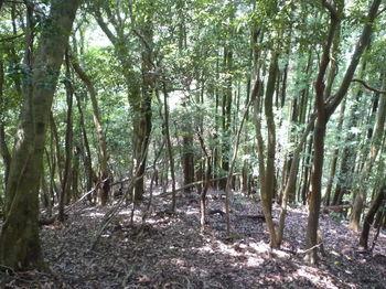 P1260504前方に植林帯.JPG