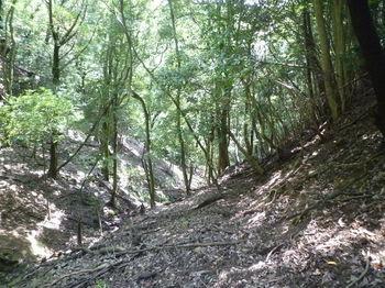 P1260510山道が現われる.JPG