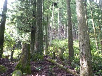 P1260551植林境尾根.JPG