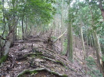 P1260557ヒノキ植林境.JPG