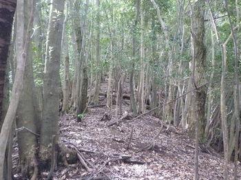 P1260558植林頂部から雑木尾根.JPG