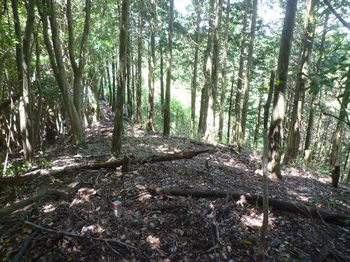 P1260591490mピーク・右側ヒノキ植林帯.JPG