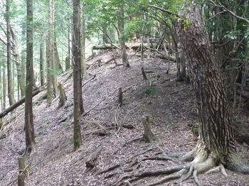 P1260603植林境平坦尾根.JPG
