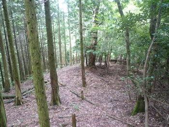 P1260605植林境尾根.JPG