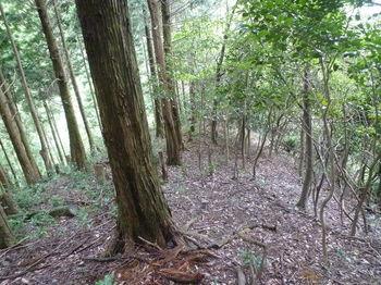 P1260607植林境尾根.JPG