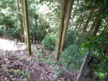 P1260608植林尾根の急降下.JPG
