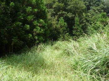 P1260623カヤ被りの林道.JPG