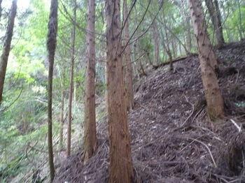 P1260646右の植林小尾根に取り付く.JPG