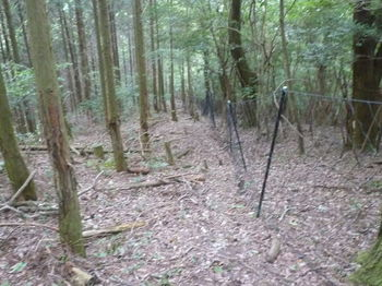 P1260696植林境・ネット.JPG