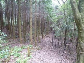P1260700植林境・鞍部方向.JPG