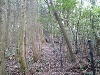 P1260701植林境.JPG