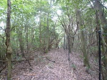 P1260712 420mピーク雑木疎林.JPG