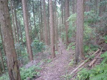 P1260737植林帯の巡視路巻き道.JPG