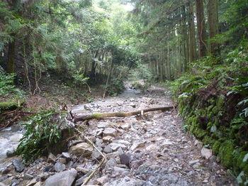 P1260790川沿いの荒れ林道.JPG