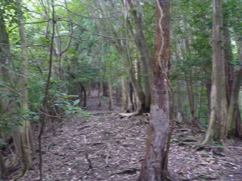 P1260817植林境の平坦尾根.JPG
