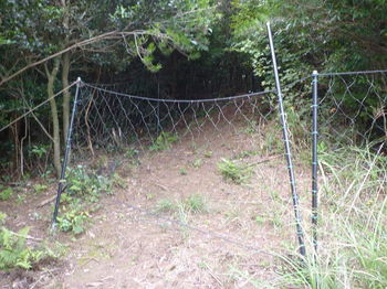 P1260824防獣ネットのゲート.JPG