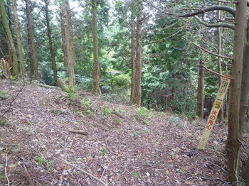 P1260831標柱・ヒノキ植林境.JPG