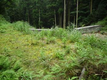 P1260877林道終点・堰堤①.JPG