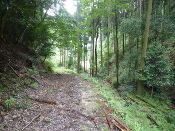 P1260879コン舗装林道.JPG