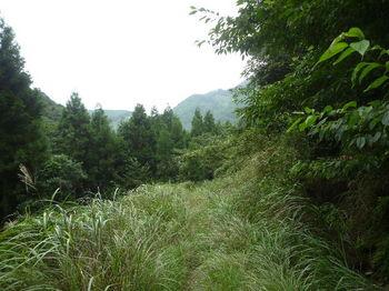 P1260882カヤ被り林道.JPG