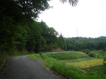 P1260892耕作地沿い.JPG