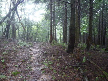 P1260926小尾根の植林境を越える.JPG