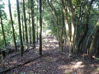 P1260995植林境尾根.JPG